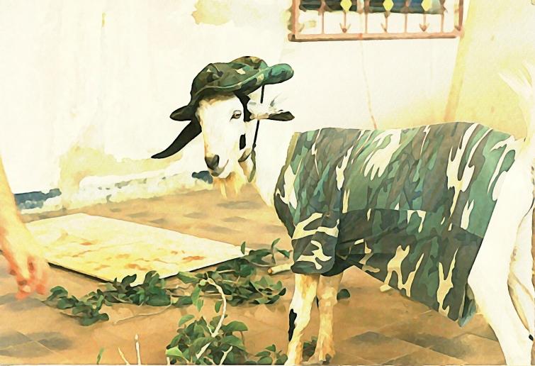Gruff the Goat