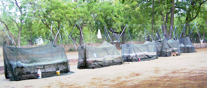army cots